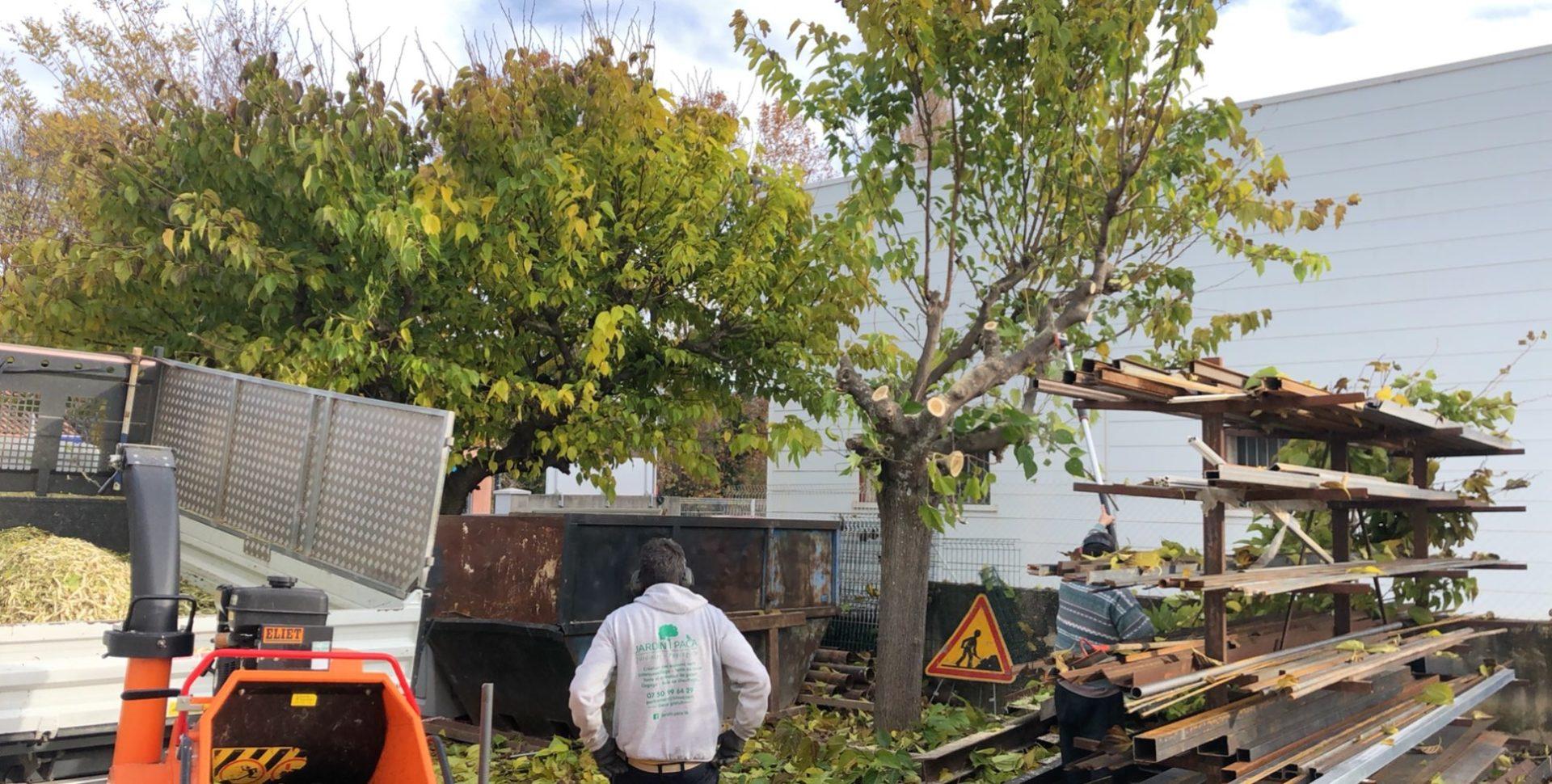 élagage abattage auriol jardin-paca